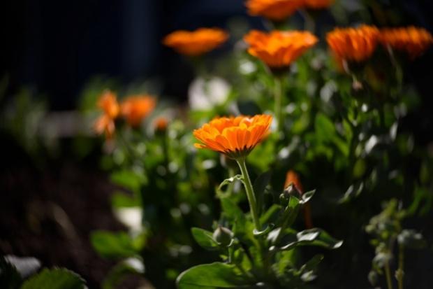 มนต์เสน่ห์แห่งภาพโบเก้วน เชิญชมตัวอย่างภาพสวยๆ จาก Lensbaby Twist 60