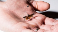 นวัตกรรมใหม่ หุ่นยนต์แมลง บินได้แบบไร้สาย ในที่โดรนเข้าไม่ถึง