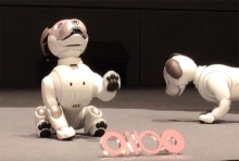'โซนี่'เปิดตัวหุ่นยนต์สุนัข'ไอโบะ'รุ่นใหม่ หลังหยุดพัฒนาตั้งแต่ปี2549 (ชมคลิป)